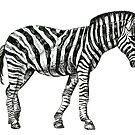 Zebra by Nicola Hanrahan