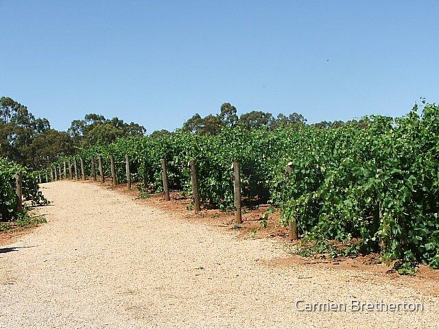 Vineyard by Carmen Bretherton