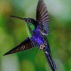 Violet Crowned Woodnymph by Linda Sparks
