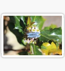 LE00130 - Holly Blue Butterfly Sticker