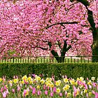 Spring Extravaganza by Jessica Jenney