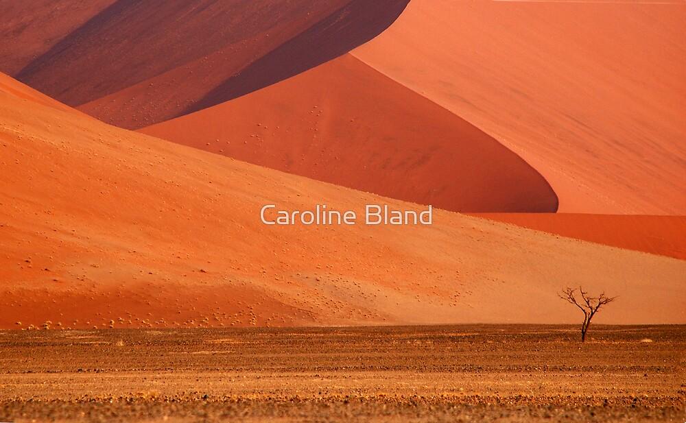 Dunes by Caroline Bland