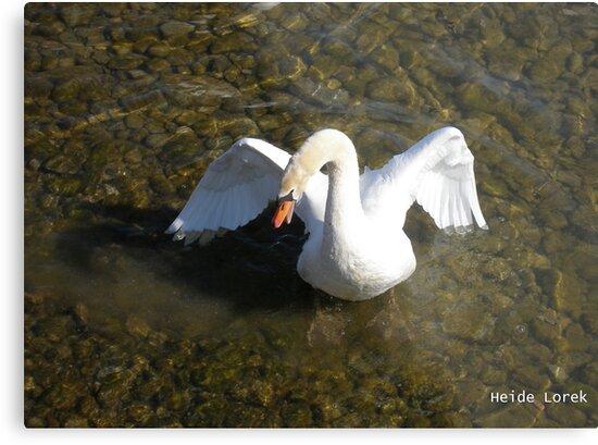 Spitting Swan by Heide  Lorek
