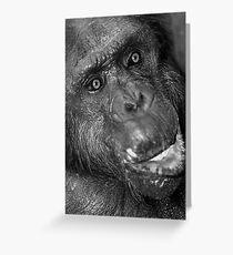 The Elder Chimpanzee Greeting Card