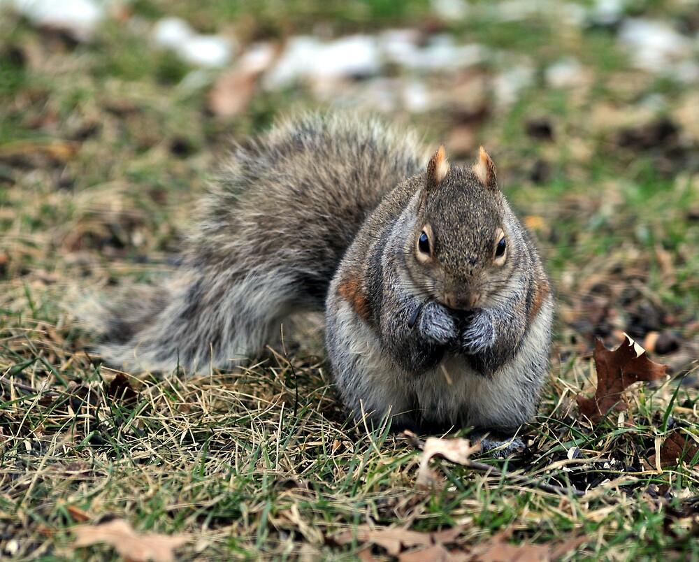 Tough Nut by dumbomsa