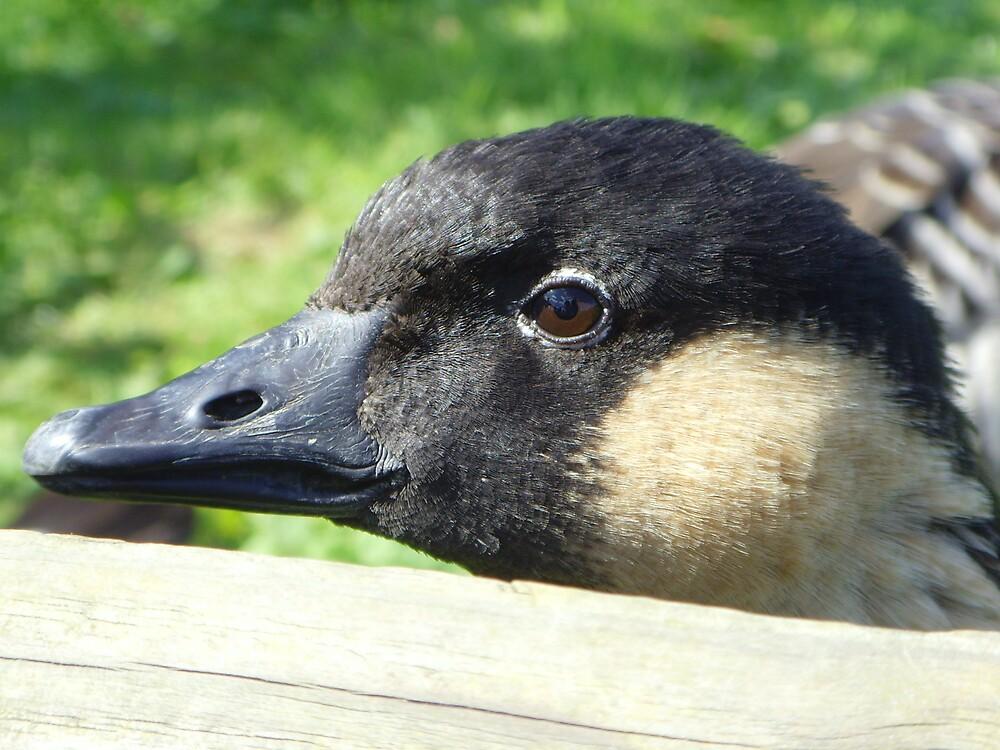 Hawaiian Goose by cadburylove
