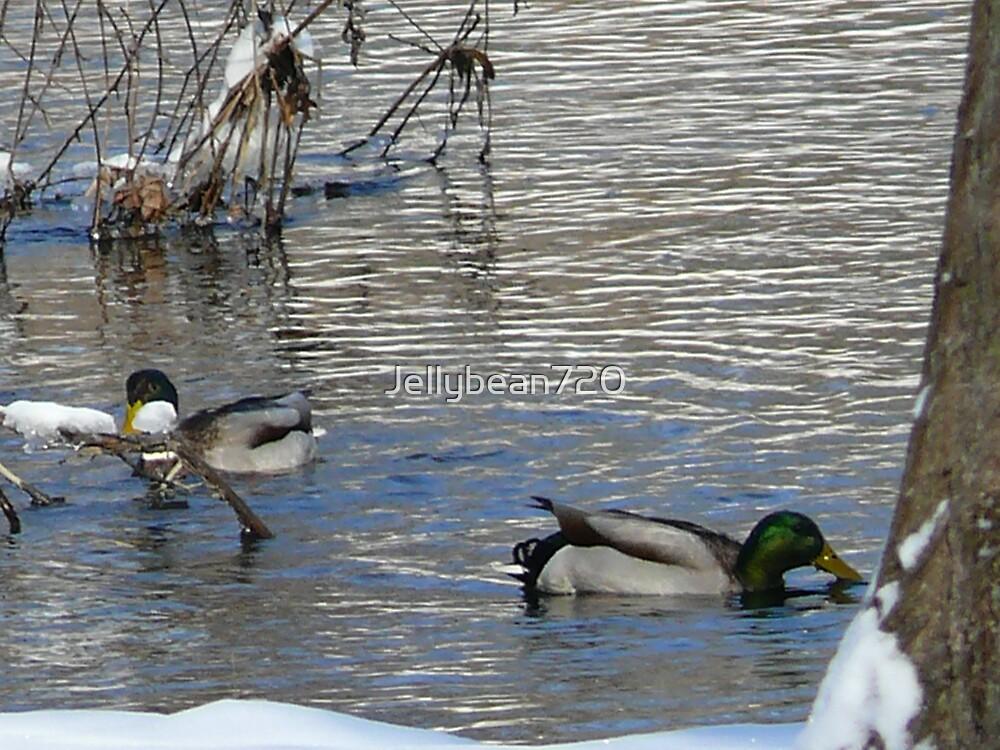 Just Ducking around by Jellybean720
