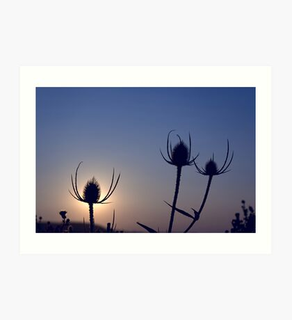 Silhouetted thistles Art Print