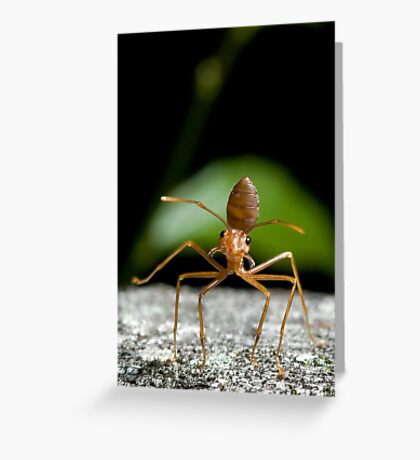Tapdancer Greeting Card