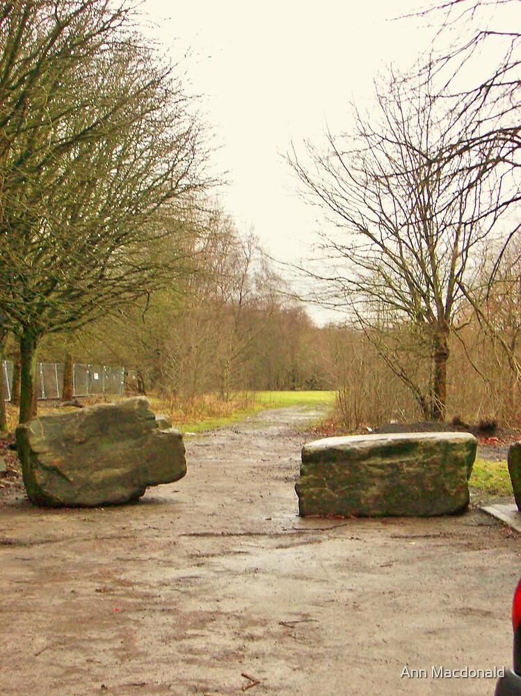 wet path by Ann Macdonald
