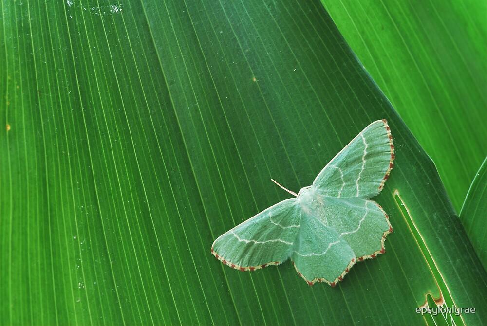 Green over green by epsylonlyrae