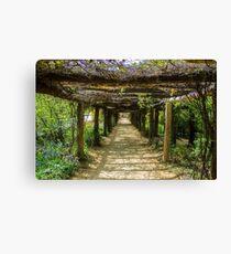 UNC Arboretum Canvas Print