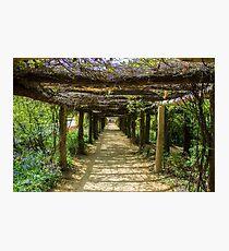 UNC Arboretum Photographic Print
