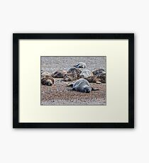 """Sleepy Seals"" Framed Print"