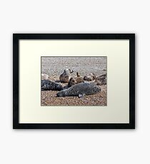 """Blakeney Point Seals"" Framed Print"