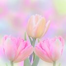 Pastel tulips on an abstract background by walstraasart
