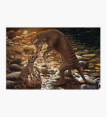 Afternoon Playtime - Thylacine Photographic Print
