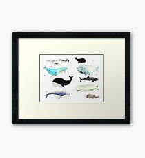 Whales! Framed Print
