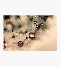 Droplets of gold Photographic Print