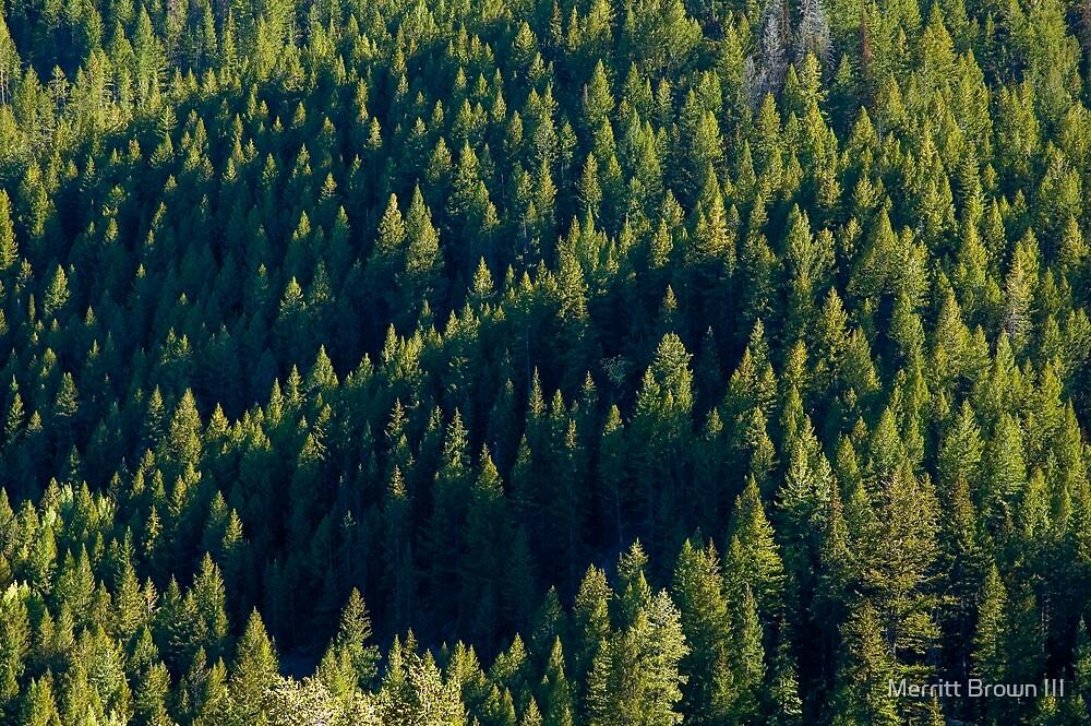 More Trees by Merritt Brown III