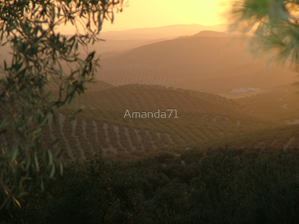 Sun Setting Over Olive Groves by Amanda71