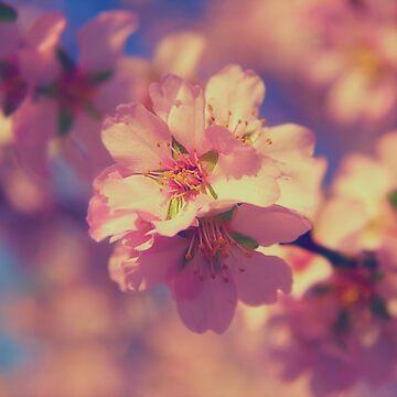 Flowering Spring by Chari-ot
