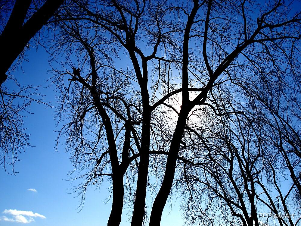 Sunlit Trees by PPPhotoArt