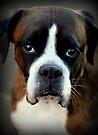 Erinnerung an Arwen - Boxer Dogs Series von Evita