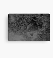 Dream of the Turtles Canvas Print