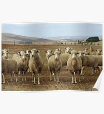What are ewe's looking at? Poster