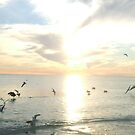 PELICANS AND SEAGULLS by Cyndi Jamerson