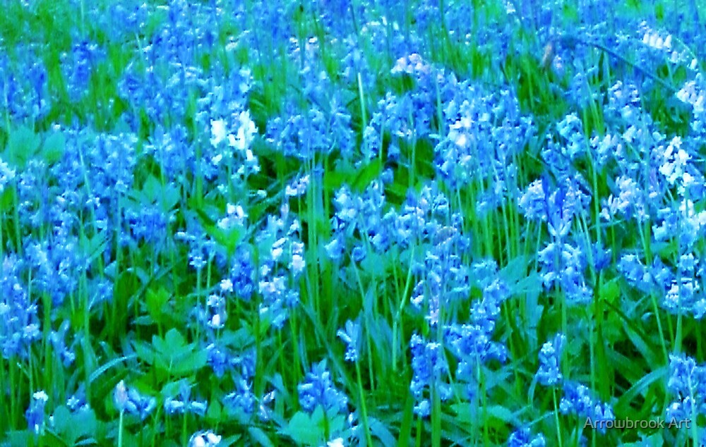 Bluebells by John Brotheridge