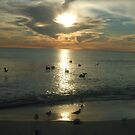 PELICANS IN LIGHT by Cyndi Jamerson
