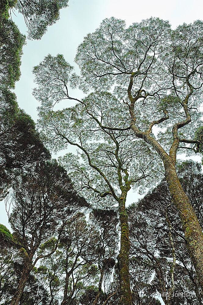 Rainforest Art - Tasmania , Australia by Philip Johnson