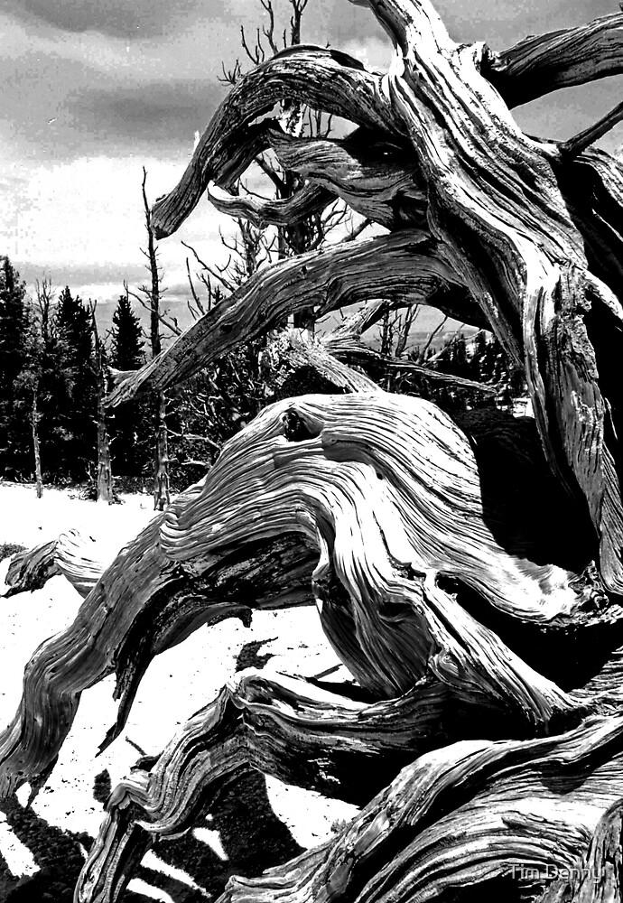 Pretzel Stump by Tim Denny