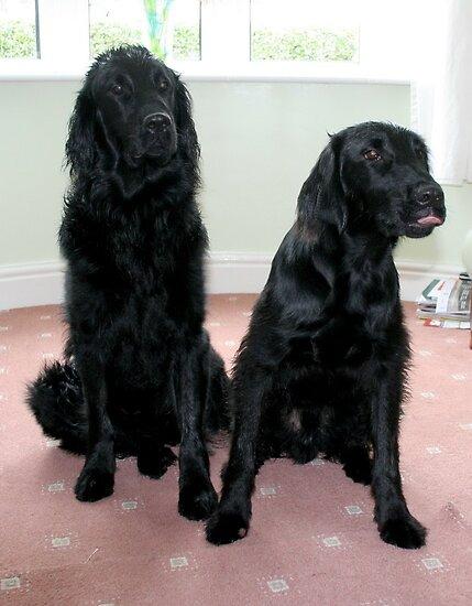 Jasper and Max by AnnDixon