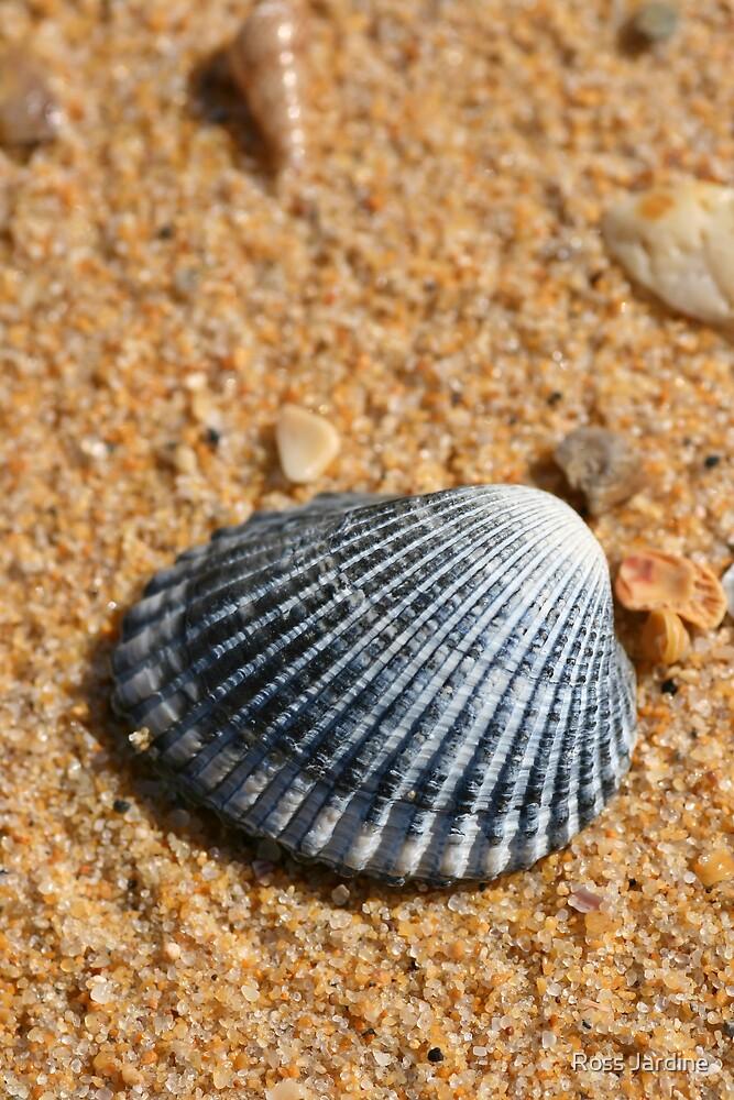 Blue Shell by Ross Jardine