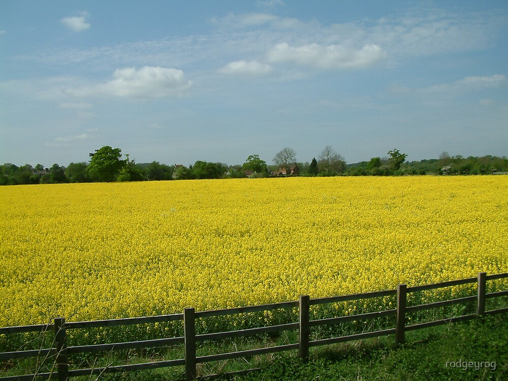 Fields of Gold by rodgeyrog