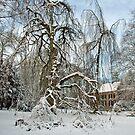 A winterday in my hometown by Arie Koene
