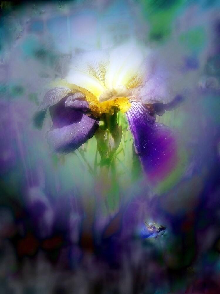 Raindrops on Purple Irises #7, nightshade by Dawna Morton