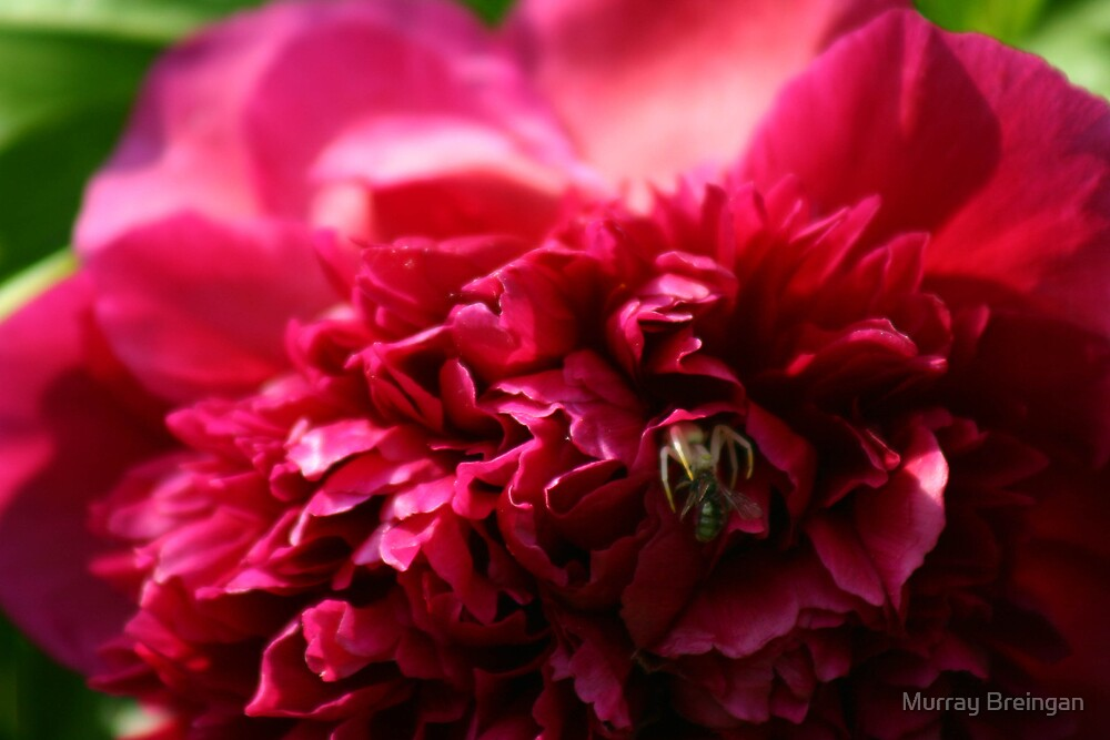 Sinister Flower by Murray Breingan