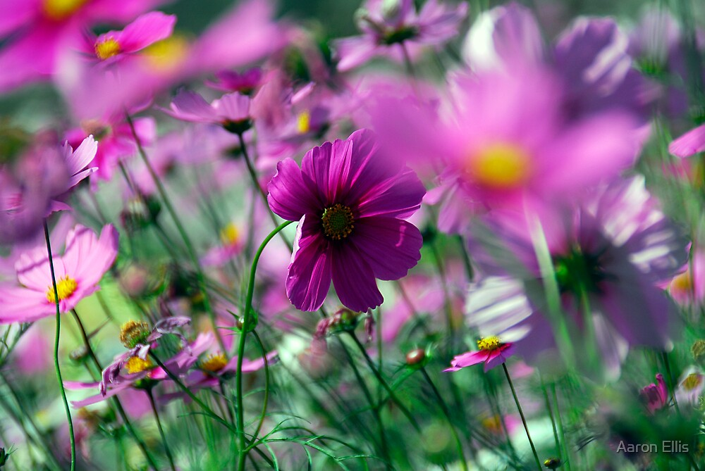 purple flower by Aaron Ellis