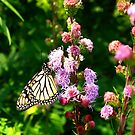 When the Monarch returns by MarianBendeth