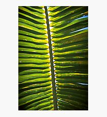 From beneath the Palm Frond. Photographic Print