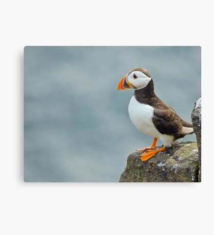 Puffin on rock Canvas Print
