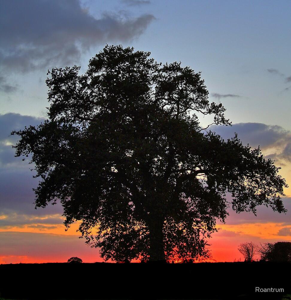 Oak at Sunset by Roantrum