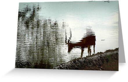Impala reflection by Sharon Bishop