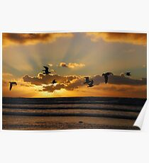 Sea-side sun-set gulls at IJmuiden Poster