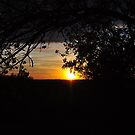 Tree Silhouette at Sunset by mltrue