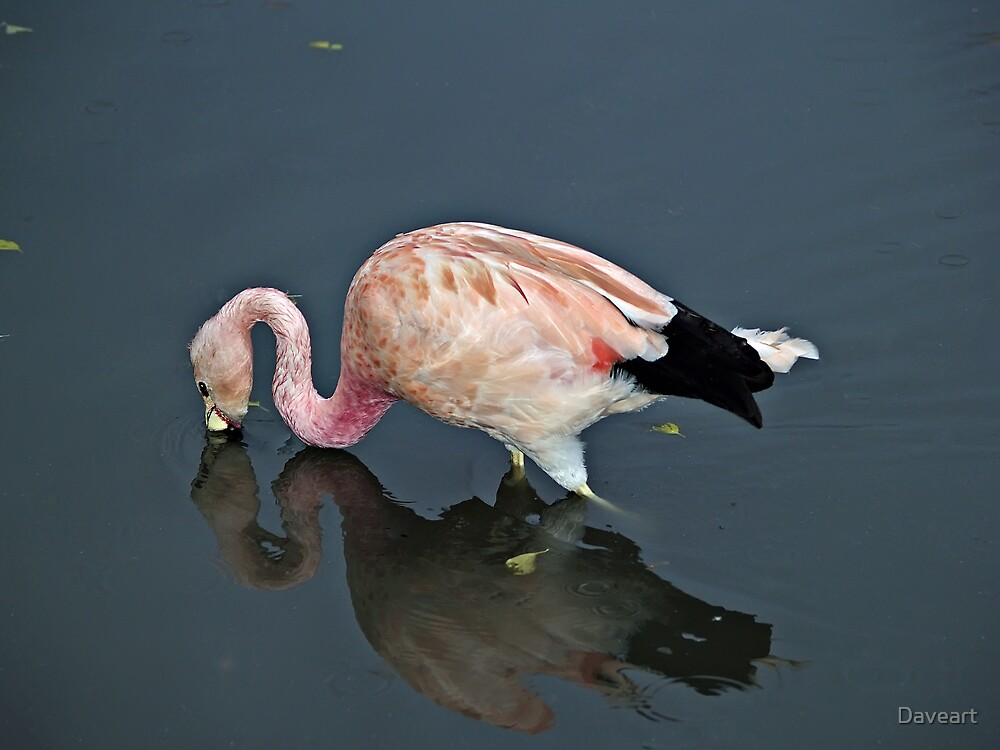 Pink flamingo by Daveart